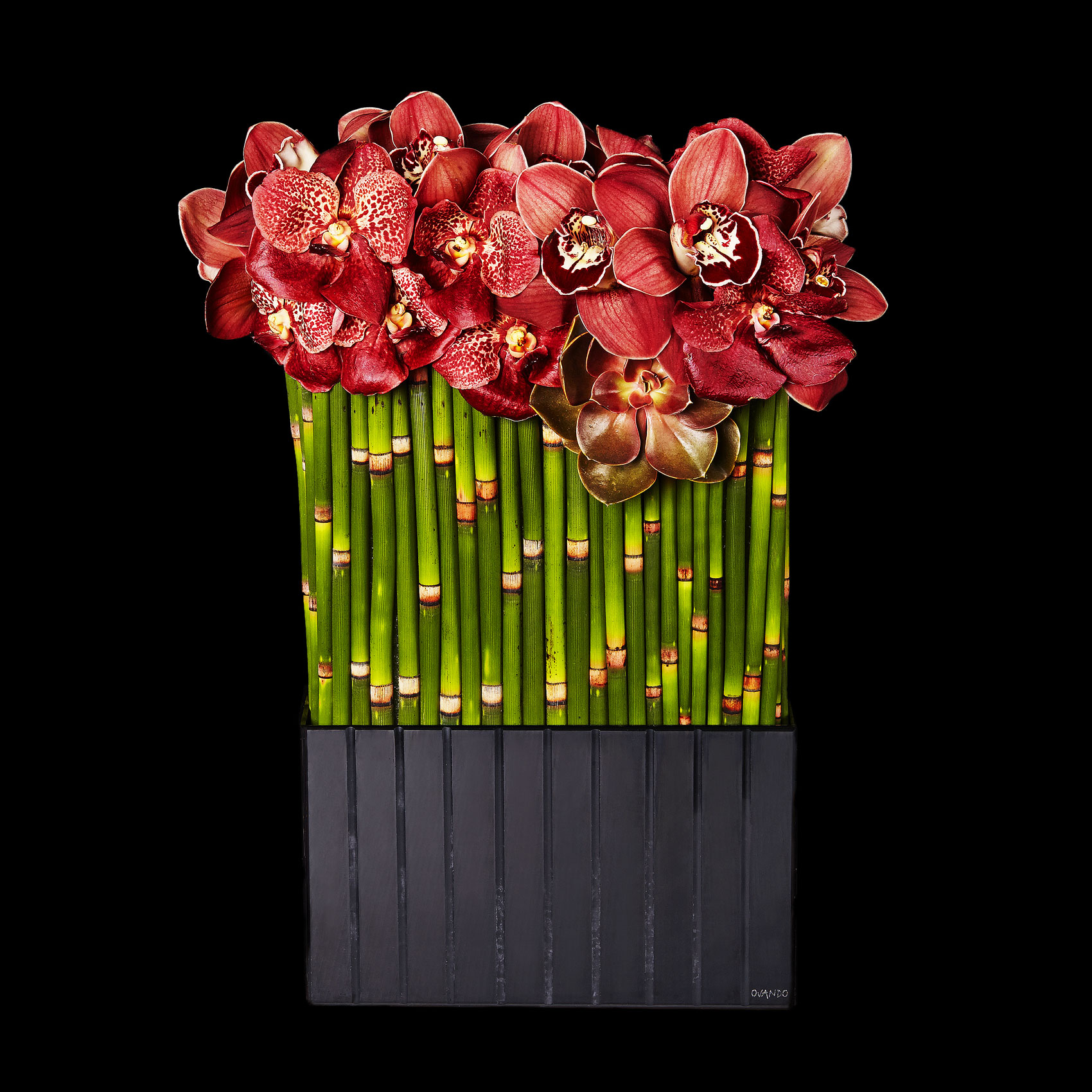 red-orchids_bamboo_floral_arrangement_valentines-day_ovando_ty-mecham